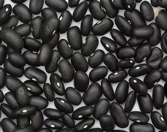 Bean - Black Turtle - Heirloom - 30 Seeds no gmo