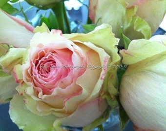 Pink and Pale Green Roses 8x10 inch Photograph
