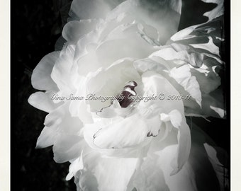 Black and White Peony 10x10 inch Photograph