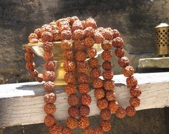 Rudraksha strands 12-14mm beads