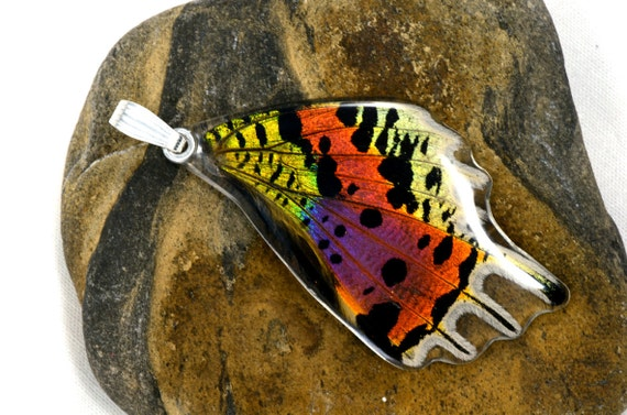 Real sunset butterfly pendant (bottom wing)