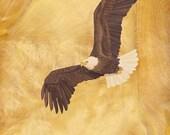 "Bald Eagle -  Wood Art GICLEE PRINT on archival matte paper - 8""x10"""