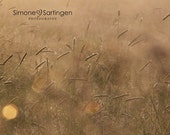 nature photography - grassland scenery in morning light