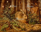 Medieval Antique Brown Beige Woodland Hare Painting Digital Download Green Foilage Plants Critters Butterflies Bird Print 42P