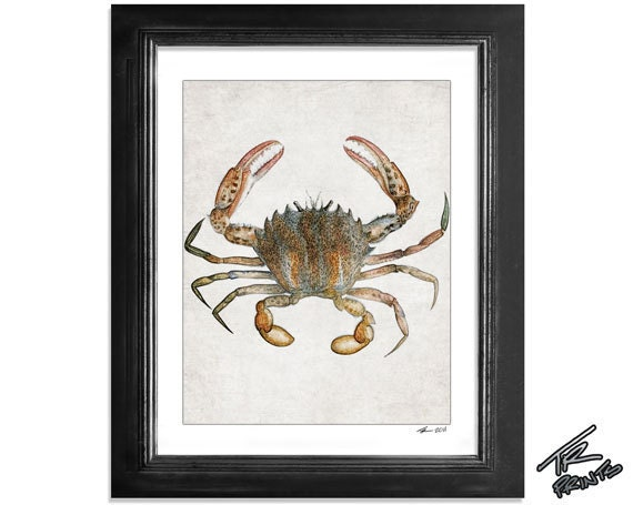 The Brown Crab - Ocean Life Series - graphic illustration design archival giclee art print 8.5x11