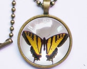 Yellow Butterfly Necklace, Vintage Photo of Female Troilus Butterfly