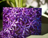 Floral Note Cards - Purple Bloom Blank Photo Note Cards Set of 2