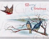 Christmas Robin and Bluebirds on Branch in Snow Vintage Postcards Digital Download Tag Collage Clipart Graphic Scan vs0095