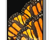 monarch butterfly wings photo collage on black high contrast design yellow orange  office wall  decor fine art photography