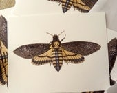 Deaths Head Moth Postcard Set - Set of 4 cards - 5-1/2 X 4-1/4