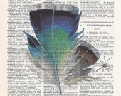 Dictionary Art Print - Upcycled Vintage Paper - Colored Feather Print - 7-3/4 x 10-3/4