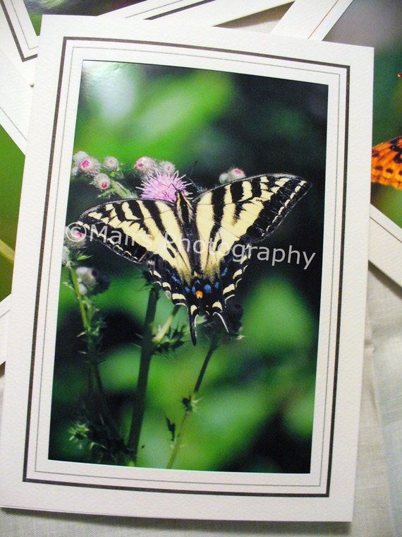 Nature Thistle Flower Butterfly Photography Tiger Swallowtail Butterfly, Mothers Day Card, Photo Greeting Cards, Blank Card, Photo Note Card