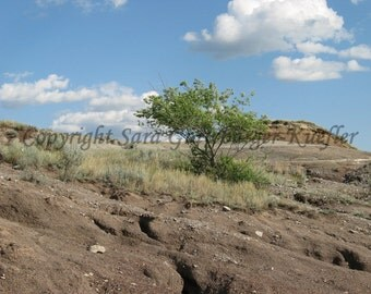 """Standing Alone - Tree in Badlands Photograph -  5 x 7"""""""