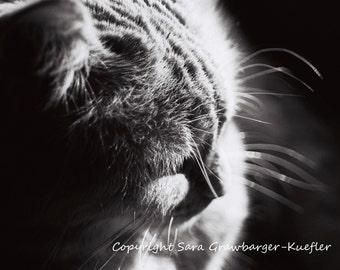 """Softness and Light - Fine Art Cat Photograph - 8 x 10"""""""