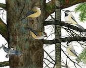 Bird note card, A Chickadee Coterie, card with black-capped and boreal chickadees in watercolor forest scene