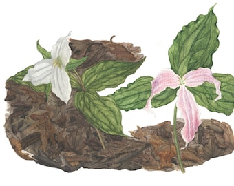 Large-flowered Trillium - Card featuring watercolor/mixed media wildflower, created on location