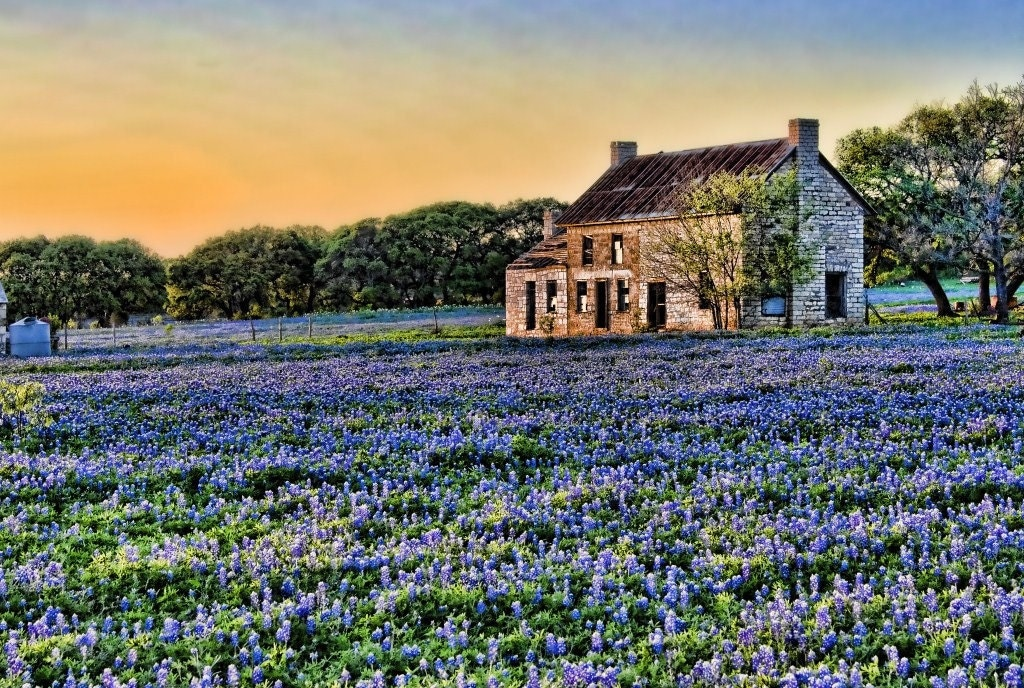 Texas Bluebonnet Field At Sunset Photographic By MshDigitalArt