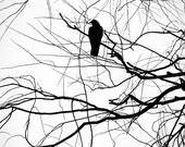 Crow Silhouette Black and White 8 x 10 Photograph,  Black & White Crow Photo.