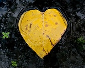 Yellow Black Leaf Heart, Valentine, Nature Lover 8 x 8 Square Photography