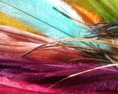 100  emu feathers, feather hair extensions, feather earrings