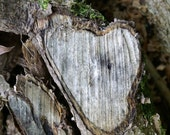 Natures Heart an a Tree image. Photographic print.  15'' x 10'' Printed on crystal archive paper. Matt or Gloss.