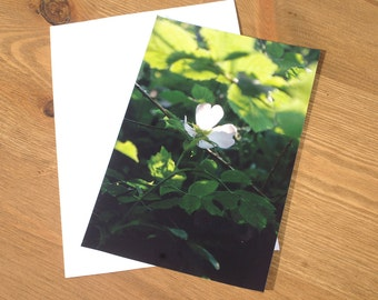 Sunlit Heart Petal Photographic Image Card.  Printed on semi- gloss card. A6 size. Blank.