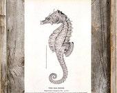 Nautical Sea Horse Antique Digital Download Printable Art File