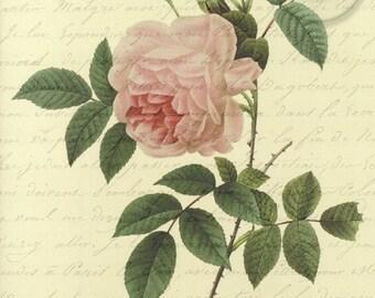 Antiqued Vintage Pink Rose Digital Download Art Nature Print with French Script Love Letter 4