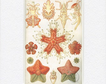 Antique Vintage Marine Sea Life Digital Download Art Nature Print Art Nouveau