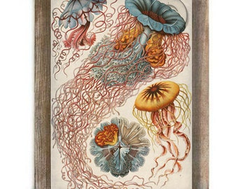 Jellyfish Marine Life Antique Illustration Digital Print Colorful Nautical Art