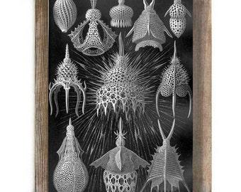 Black and White Skeletal Micro Organism Antique Illustration Digital Download Art Print Science Geek