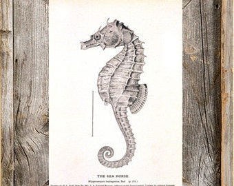 Nautical Sea Horse Antique Digital Download Printable Art File