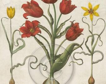 Antique Vintage Floral Tulip Art Print Digital Download You Print