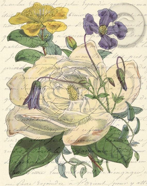 Antiqued Vintage Flower Floral Digital Download jpg file Botanical Art French Love Letter Script