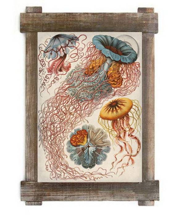 Jellyfish Marine Life Antique Illustration Digital Print Colorful Nautical Art