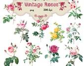 Clip Art :Vintage Roses Transparent Png  Files 001