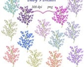 Clip Art: Babys Breath  Embellishments   Transparent Png  Files 102