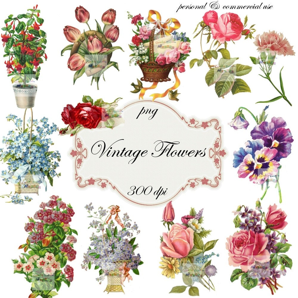 Antique Floral: Clip Art: Flowers Vintage Png Digital Files No 041