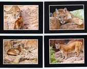 Cougar Photo Greeting Cards, Set of 4 Notecards with Mountain Lions, Pumas, Wildlife Photography, Fine Art Photography