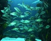 Aquarium Glow
