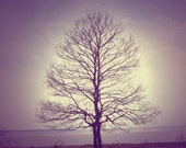 """Wedding Gift, Intertwined Tree Silhouette """"Together We Are Stronger"""""""