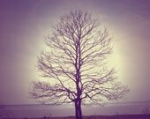 Intertwined Trees Art Print. Use for Wedding Gift, Thank You Cards, Favors, etc.