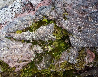 Lava and Icelandic Moss - Fine Art Photography