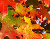 Fall color greeting cards