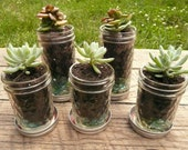 Quilted Mason Jar Succulent or Herb Planters with Free Chalkboard Labels - Set of Five