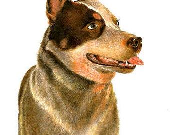 Original Oil Portrait Painting AUSTRALIAN CATTLE DOG Artwork from Artist