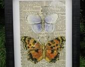 "Butterfly Art Vintage Butterfly Print Altered Art Collage Home Decor Natural History Specimen Box Original Art Framed 5 1/2"" x 7 1/2"""