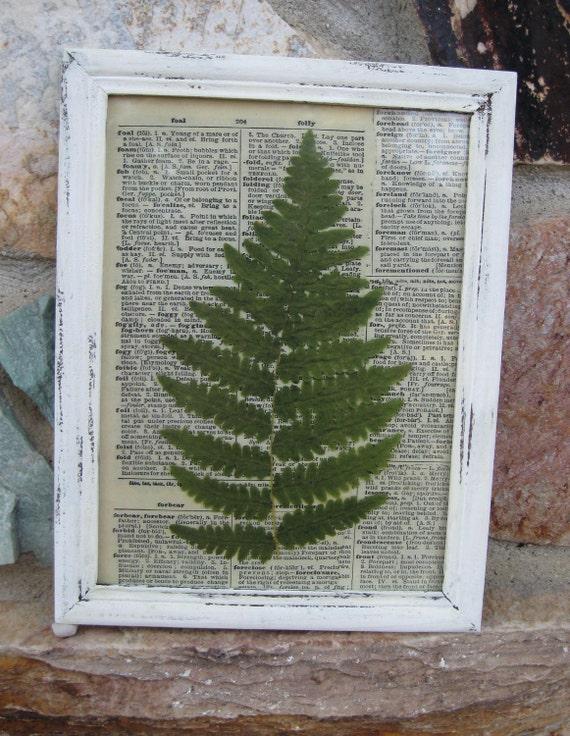 Vintage Fern Print, Home Decor, Framed Botanical Fern Prints, Shabby Chippy White Framed Pair of Fern Prints, 7 x 9 inches