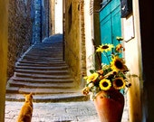 "SITTING PRETTY in TUSCANY - an 8""x12"" Fine Art Photograph"