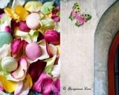 Paris Photos - Rose Petals - Pink Macarons - Butterfly Graffiti - Paris Home Decor - Wall Art